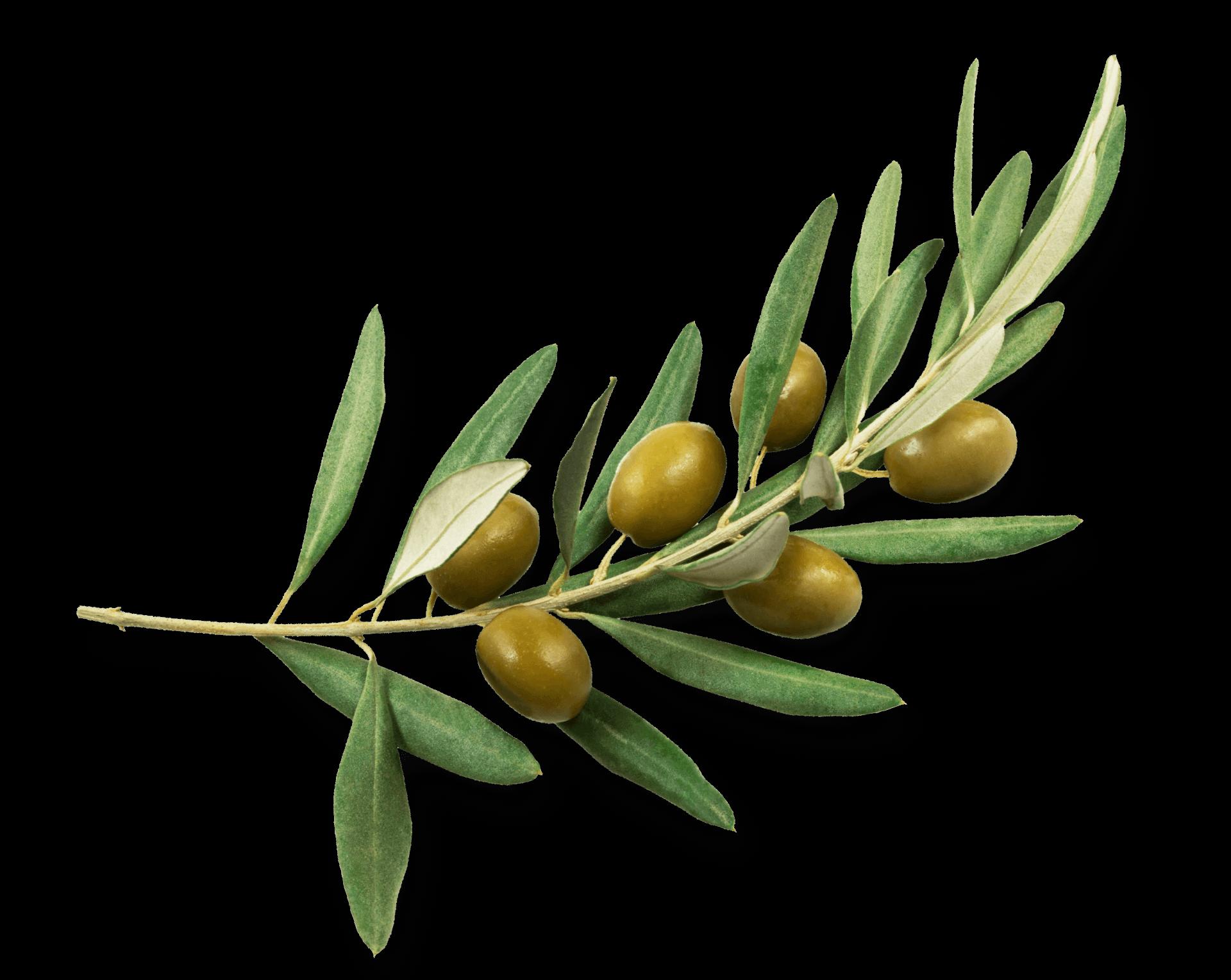 Producteur huile olive sud ouest